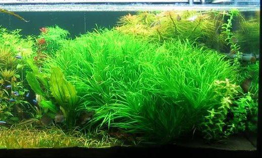日本箦藻——《碧水风和》