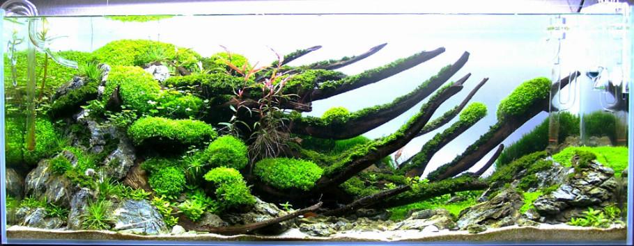 120cm沉木水草造景开缸过程