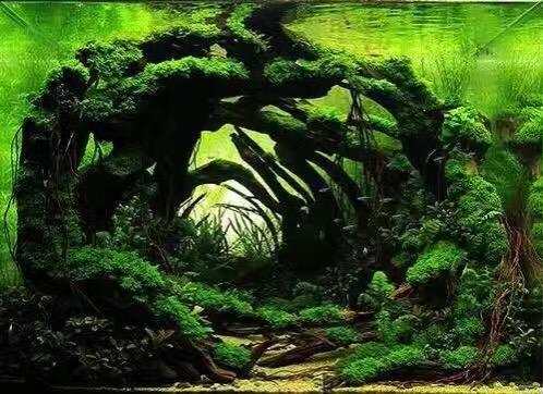 神秘的森林深处
