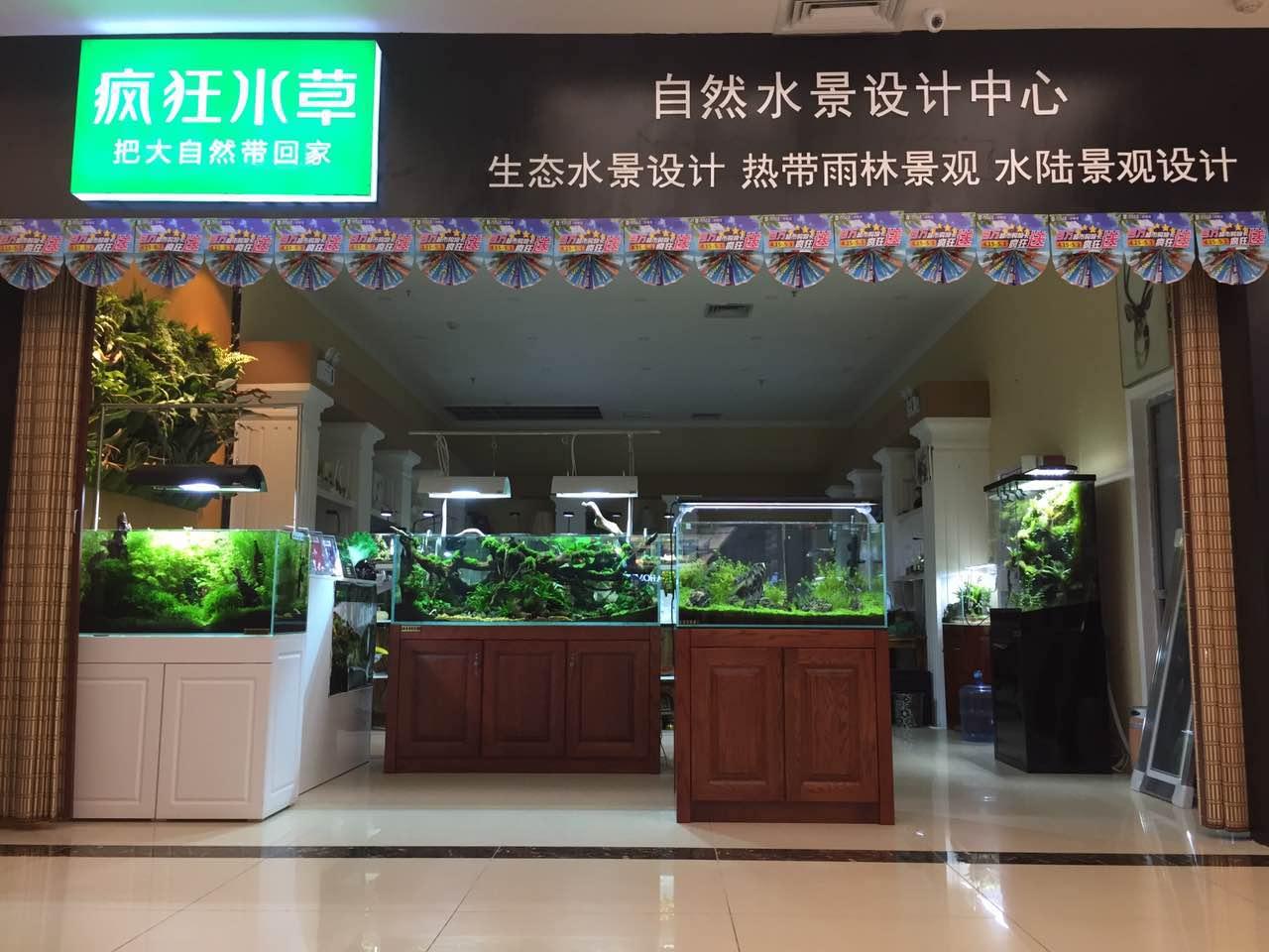 碧水风和碳化植物照明灯使用场景展示——邯郸老徐
