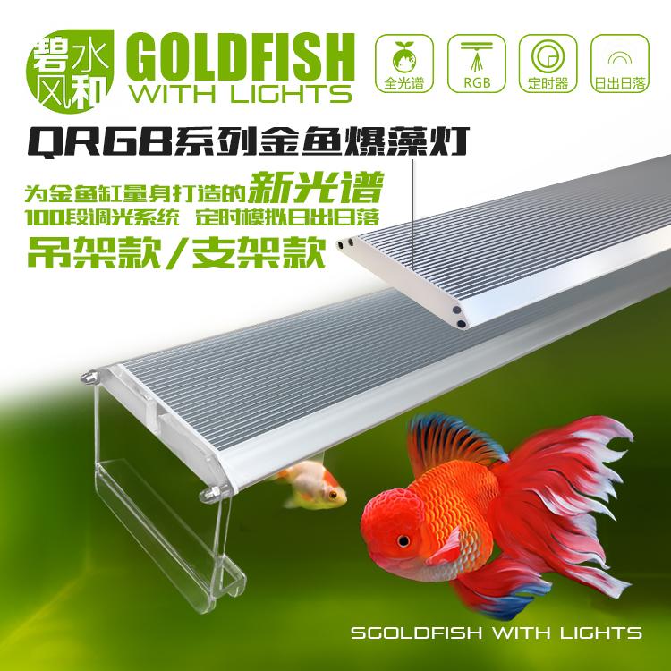 碧水风和金鱼爆藻灯,原生鱼灯